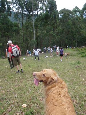 Trekking 4 (120)