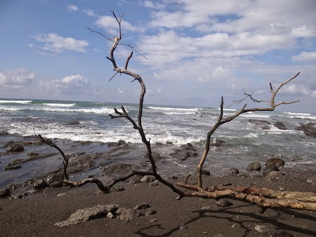 26. Arbori doborati pe plaja.JPG