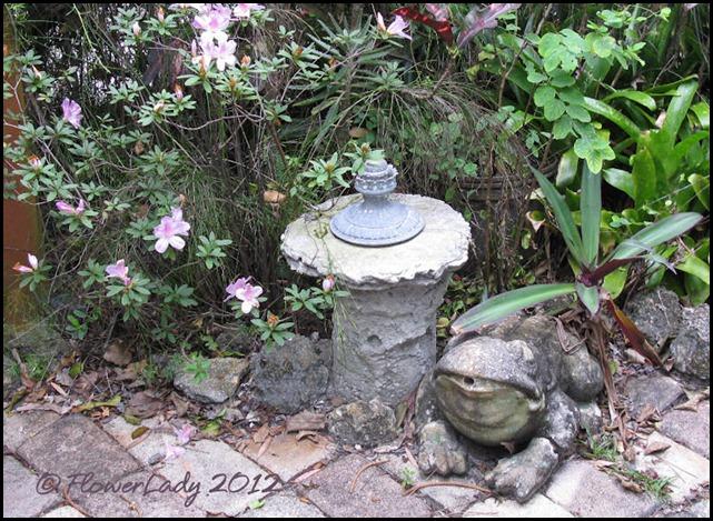 03-07-azaleas