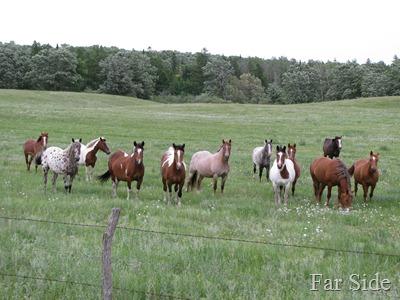 Twelve Horses
