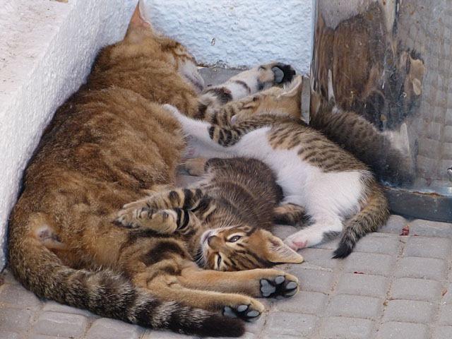 Katzen3