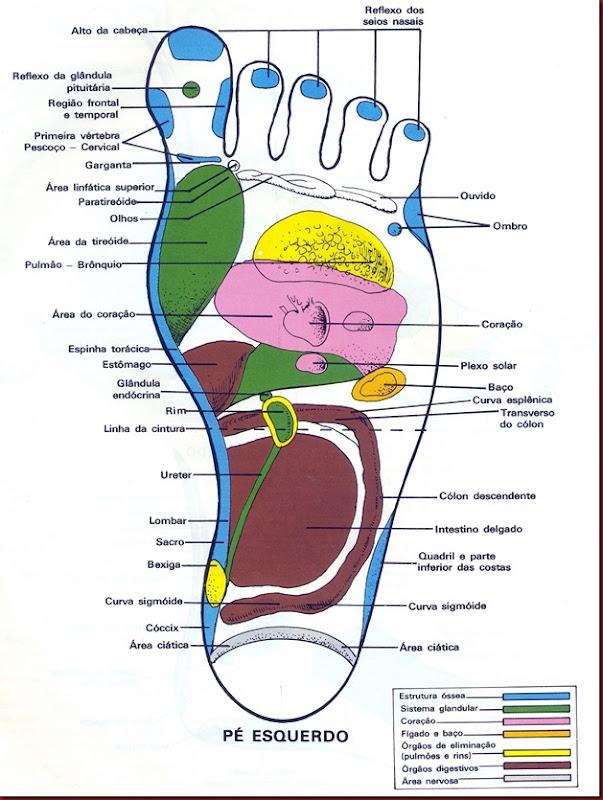 Reflexologia Mapa do Pé Esquerdo