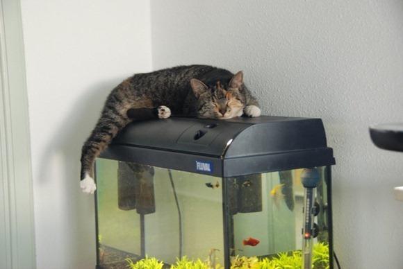 Cats Will Sleep Anywhere 24