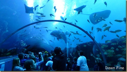 Atlanta Aquarium_232