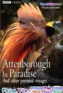 Những Loài Chim Thiên Đường - Bbc Natural World - Birds Of Paradise
