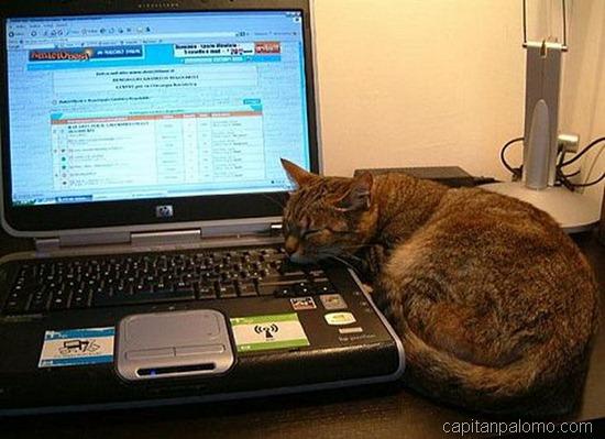 gatos en ordeandor  (1)