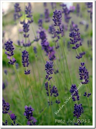 LavendelVTNMSGN