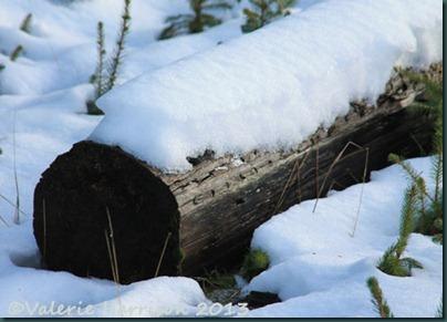15-snowy-log