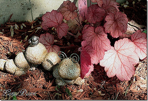Heuchera_GeorgiaPeach