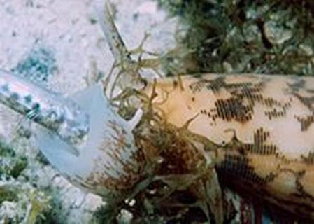 Amazing Pictures of Animals, Photo, Nature, Incredibel, Funny, Zoo, Conus, marine gastropod molluscs, Alex (10)