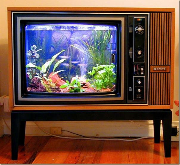 Aquariums créatifs et insolites-019