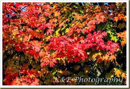 Fall 2013 (36 of 59)