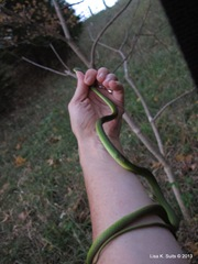 rough green snake on arm