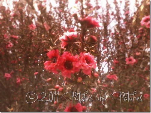 Balada  das muitas flores érica