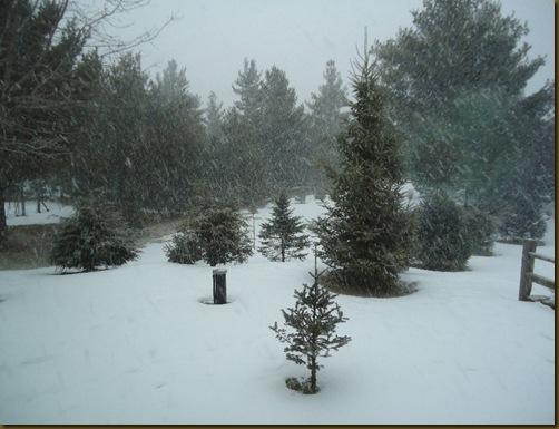 Snowy mornng 2