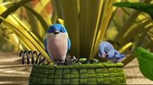06 les oiseaux