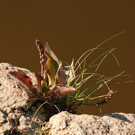 Still Life? by Andy Kohn - Nature Up Close Rock & Stone
