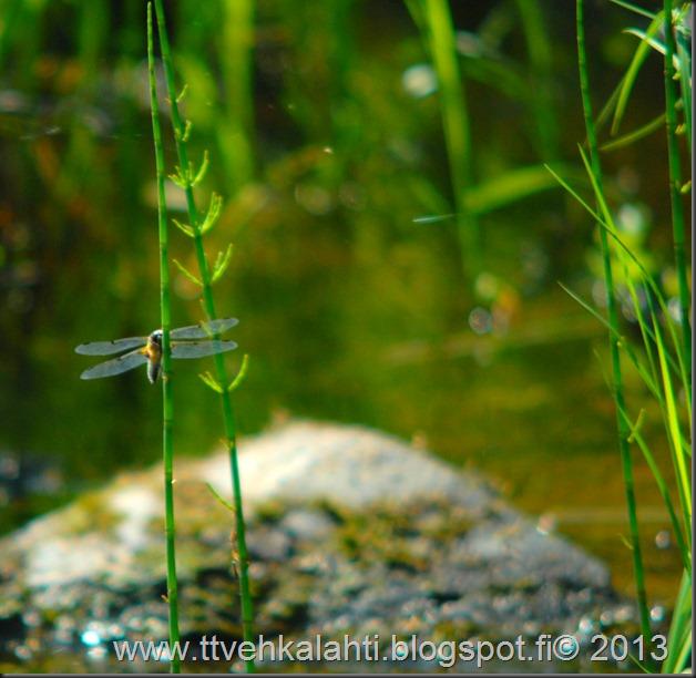 katuvalon vaihto sudenkorento super-komura 051