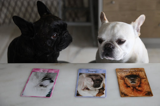 Sharkey, what are all of these photo cards in front of you?