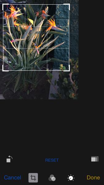 iOS 8 in crop mode