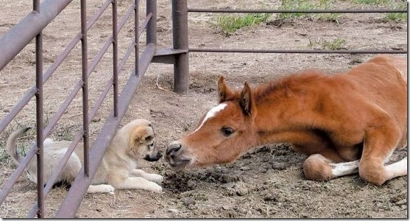 funny-animals-cute-16