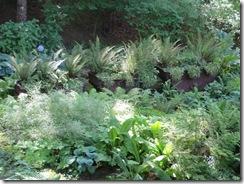 Butchart Gardens 51