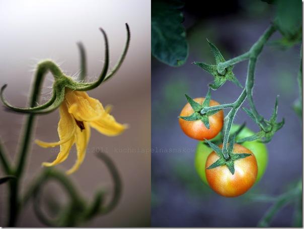 Zupa pomidorowa Billa Grangera