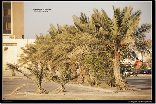 Bahrain 48