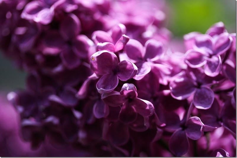 Garden May-17-blog