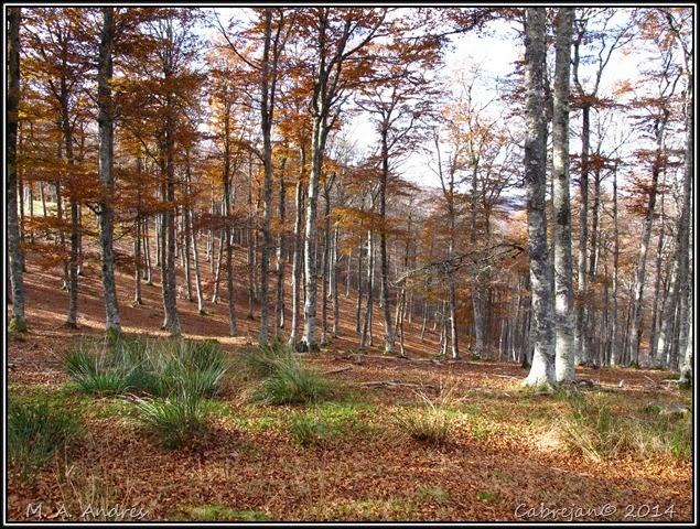 Lantz otoño 065