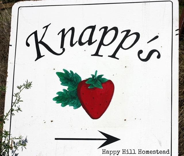 Knapp's