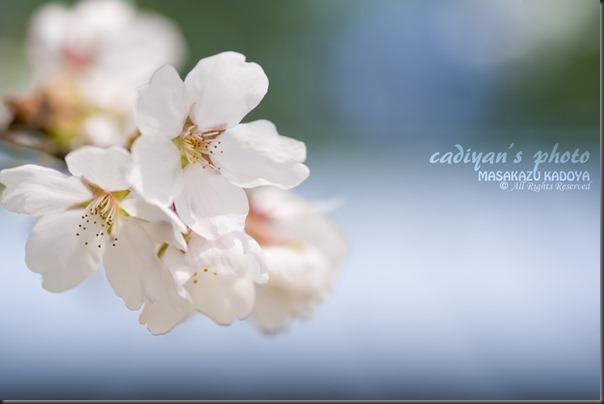 D700_2013-04-04_030