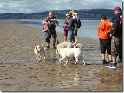 Morecambe Bay Walk (31)