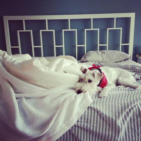 Sleepy Ike (Wire Fox Terrier)