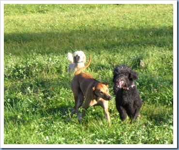 20111028_dogs_013