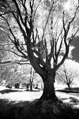 The-Tree-7