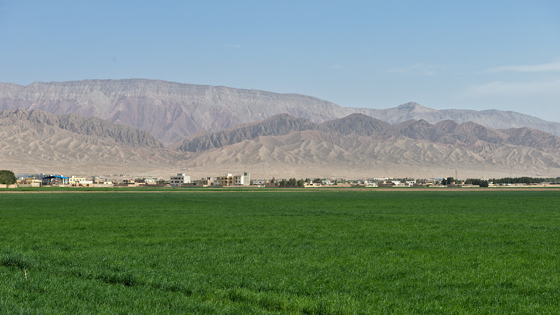 Endless wheat fields in the middle of the desert.