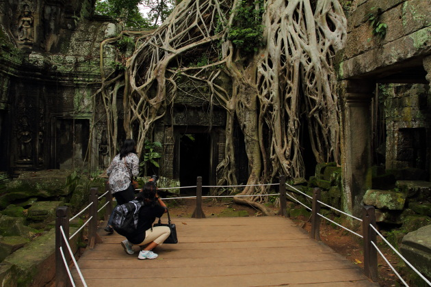 Photographing the giant roots of Ta Prohm, Siem Reap, Cambodia