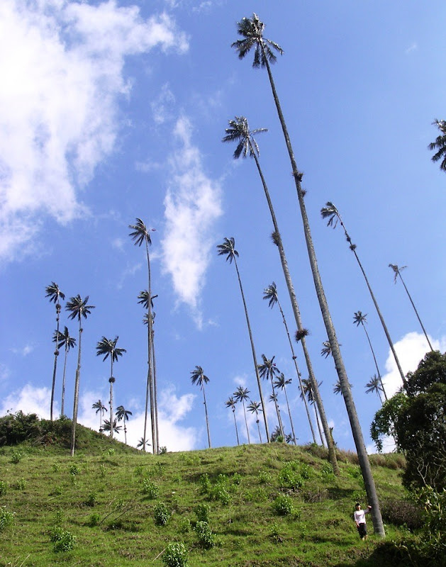 cocora-valley-11
