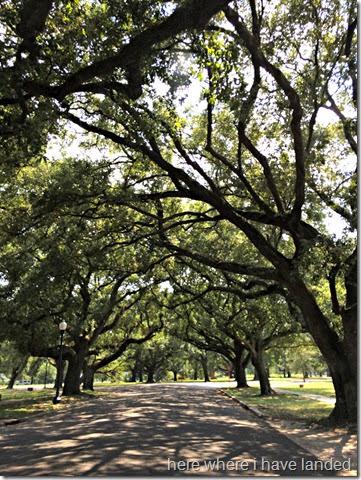 OldOakTrees
