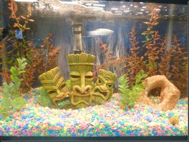 Olivia's fish tank