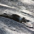 """Plus jolis mais pas plus farouches qu'à Central Park. Normal, les enfants des touristes leur donnent des bouts de leur pizza sous l'oeil bienveillant de leurs géniteurs et malgré les panneaux partout qui disent """"Feeding them is killing them""""."""