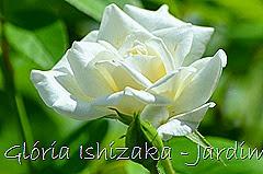 4  - Glória Ishizaka - Rosas do Jardim Botânico Nagai - Osaka