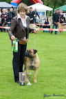 20100513-Bullmastiff-Clubmatch_31120.jpg