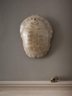 Jamb - Turtle Shell