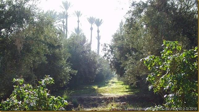 Rosales, olivos y palmeras se mezclan en una misma zona