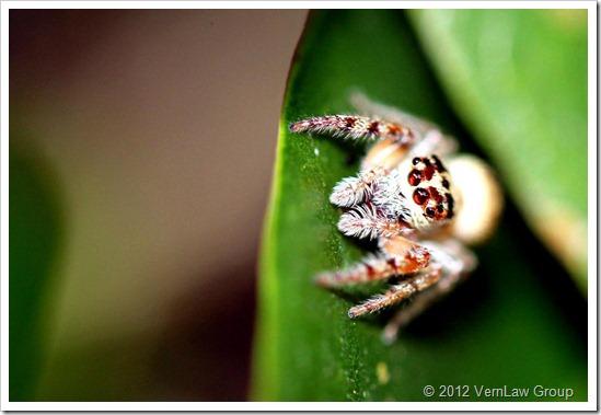 Spider_Wilbur_4_IMG_0270
