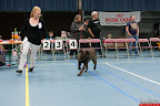 20130510-Bullmastiff-Worldcup-0660.jpg