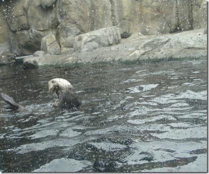 aquarium 137