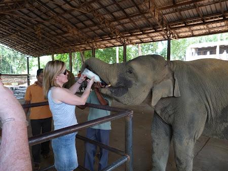 Orfelinat Sri Lanka: hranim un elefant
